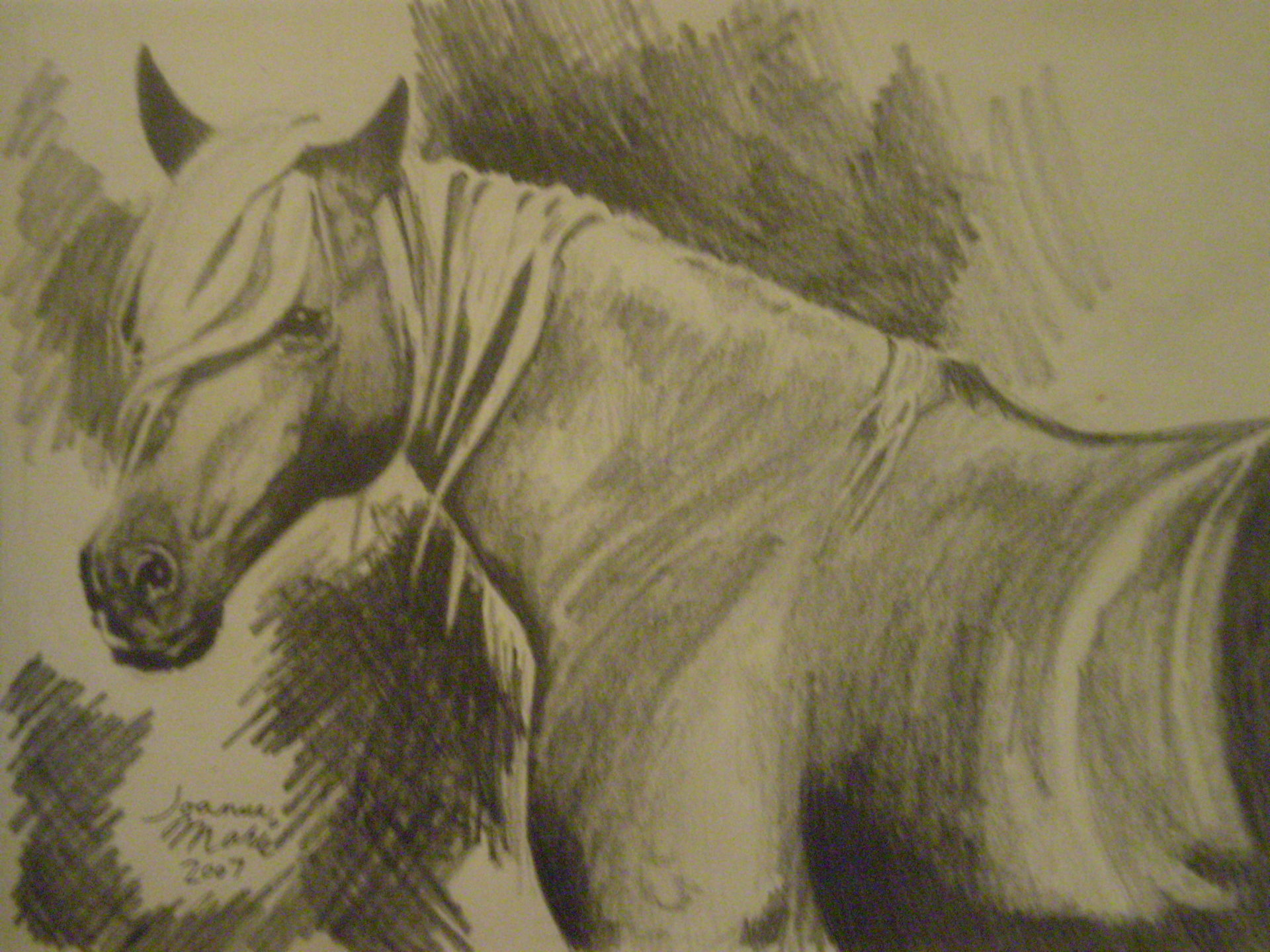 Freedom, 2007, 8x10, Graphite Pencil